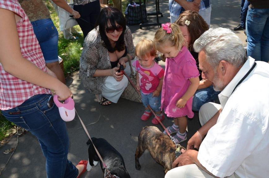 В Мариуполь на выставку собак привезли необычайно редкую породу – тазу (ФОТОРЕПОРТАЖ), фото-13