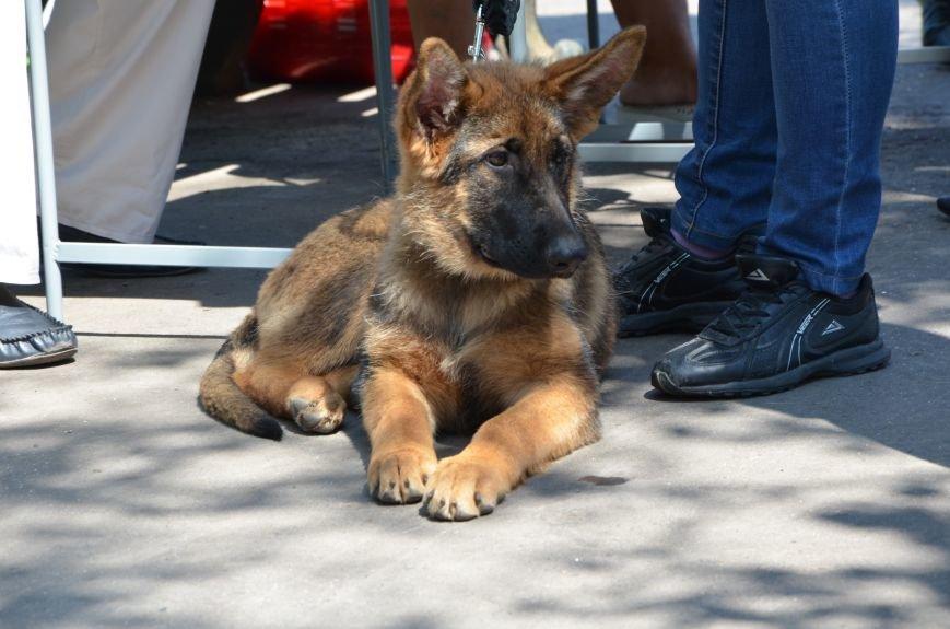 В Мариуполь на выставку собак привезли необычайно редкую породу – тазу (ФОТОРЕПОРТАЖ), фото-20