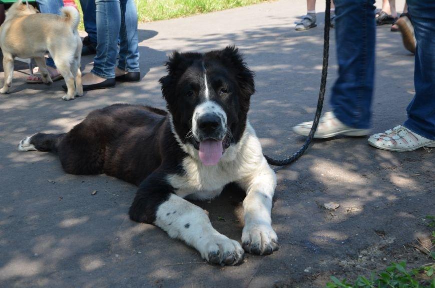 В Мариуполь на выставку собак привезли необычайно редкую породу – тазу (ФОТОРЕПОРТАЖ), фото-23