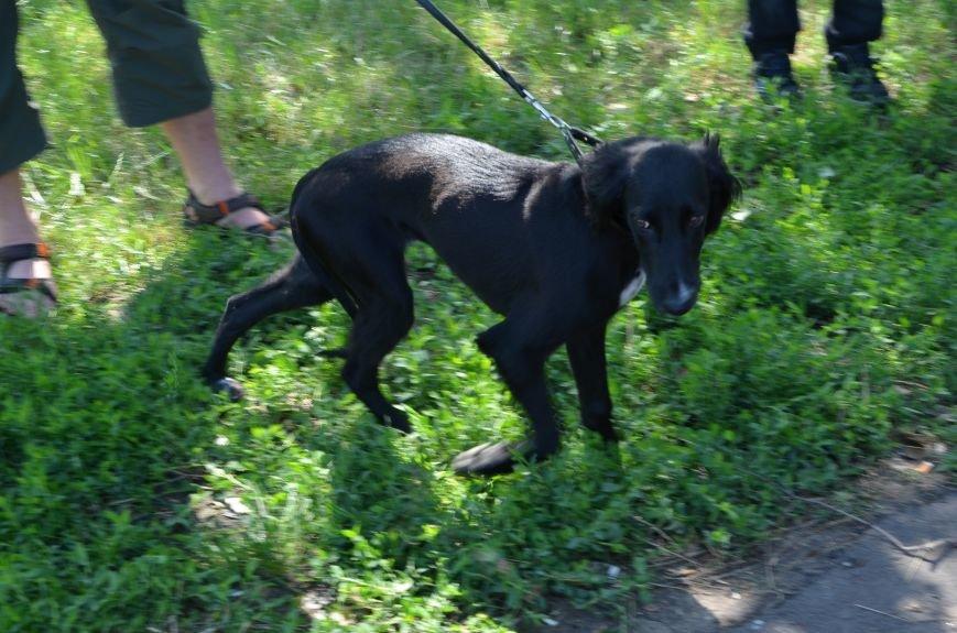 В Мариуполь на выставку собак привезли необычайно редкую породу – тазу (ФОТОРЕПОРТАЖ), фото-6
