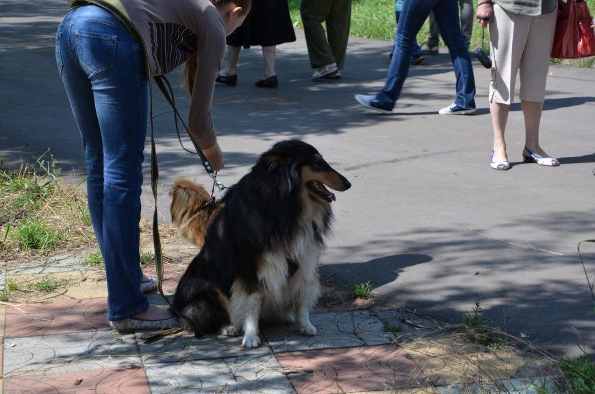В Мариуполь на выставку собак привезли необычайно редкую породу – тазу (ФОТОРЕПОРТАЖ), фото-28
