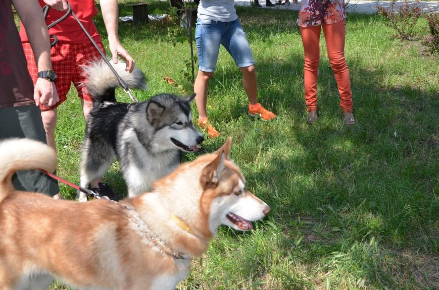 В Мариуполь на выставку собак привезли необычайно редкую породу – тазу (ФОТОРЕПОРТАЖ), фото-33