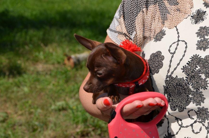В Мариуполь на выставку собак привезли необычайно редкую породу – тазу (ФОТОРЕПОРТАЖ), фото-14