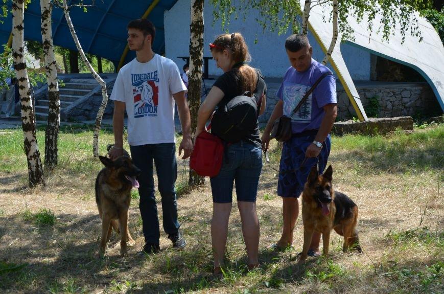 В Мариуполь на выставку собак привезли необычайно редкую породу – тазу (ФОТОРЕПОРТАЖ), фото-16