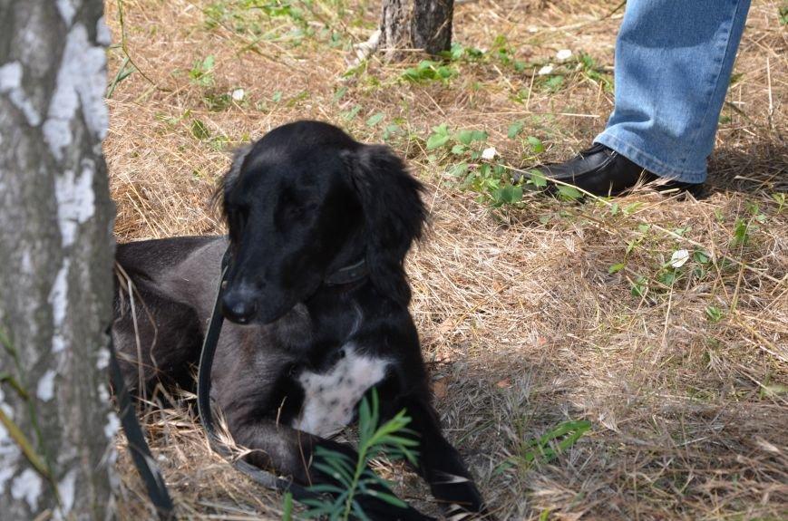 В Мариуполь на выставку собак привезли необычайно редкую породу – тазу (ФОТОРЕПОРТАЖ), фото-27