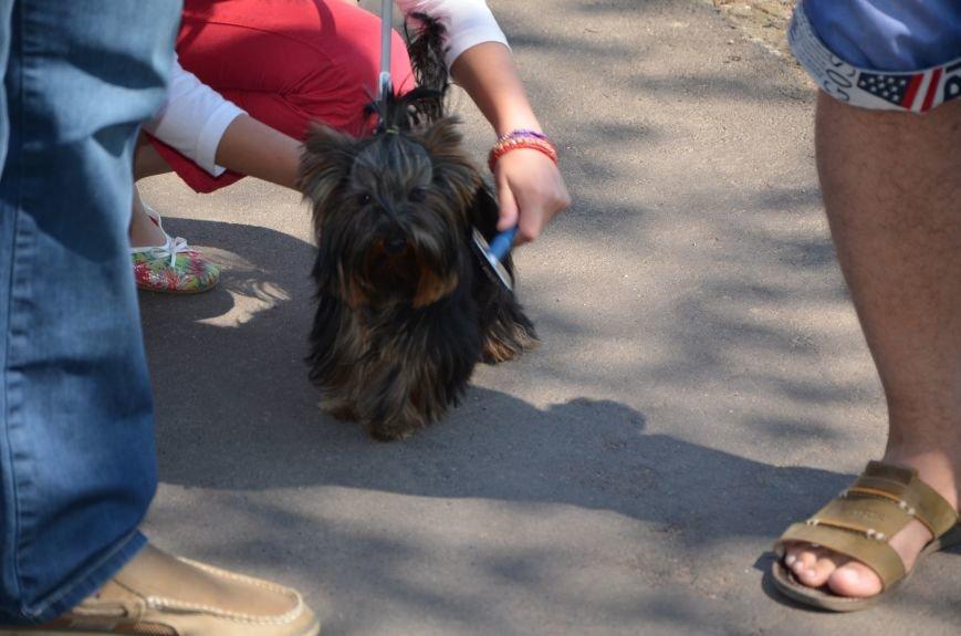 В Мариуполь на выставку собак привезли необычайно редкую породу – тазу (ФОТОРЕПОРТАЖ), фото-10