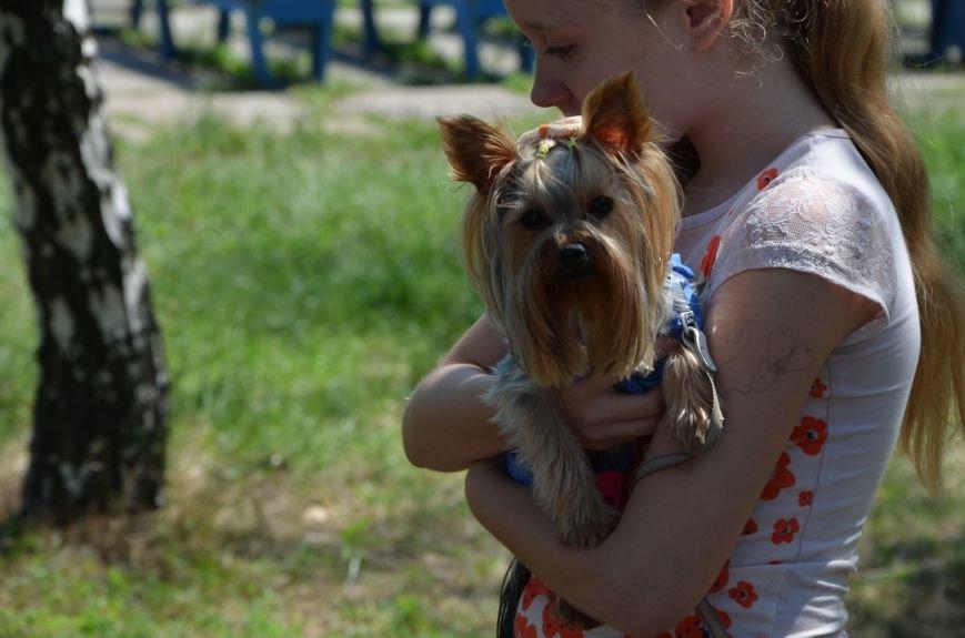 В Мариуполь на выставку собак привезли необычайно редкую породу – тазу (ФОТОРЕПОРТАЖ), фото-18