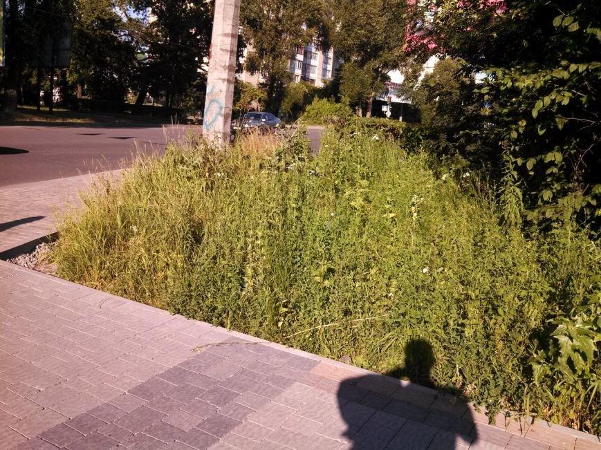 Тернопільські парки заростають травою (фото), фото-2