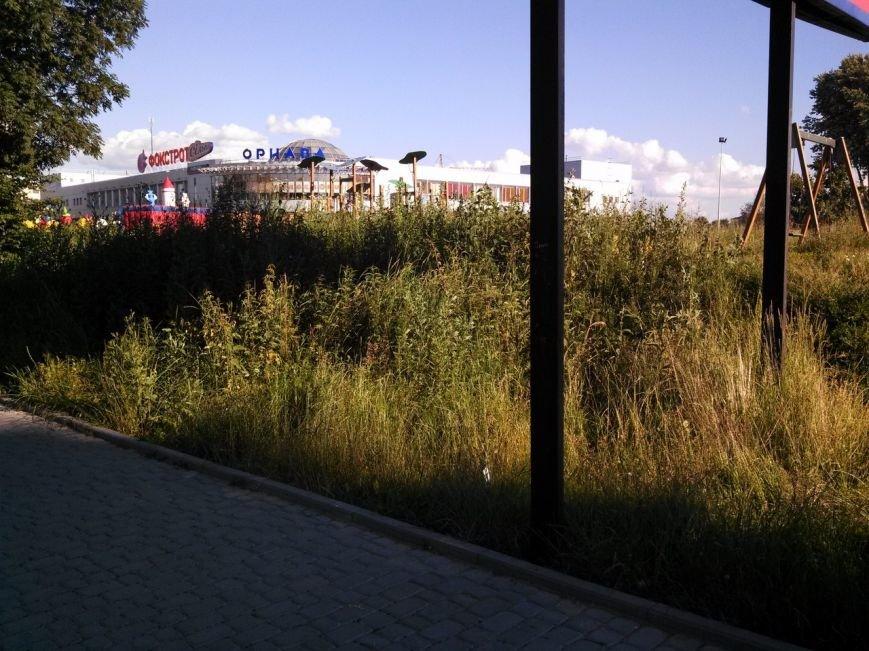 Тернопільські парки заростають травою (фото), фото-1