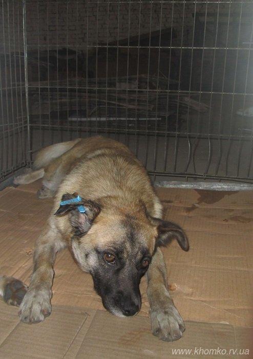У Рівному розпочато стерилізацію собак (Фото), фото-2