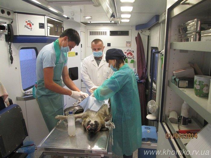 У Рівному розпочато стерилізацію собак (Фото), фото-3