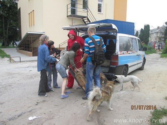 У Рівному розпочато стерилізацію собак (Фото), фото-1