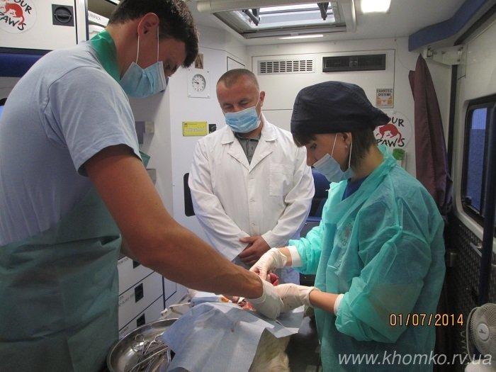 У Рівному розпочато стерилізацію собак (Фото), фото-4