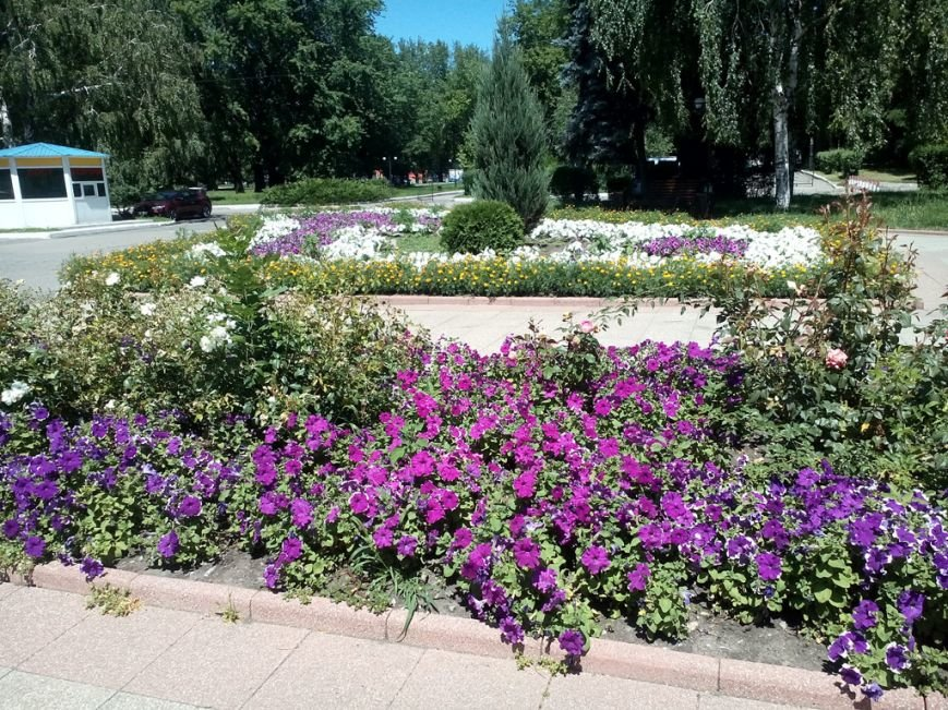 В Красноармейске продолжается благоустройство мест отдыха горожан, фото-1