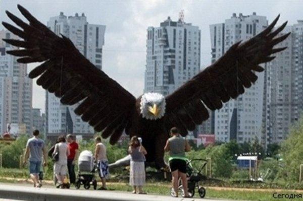 В Киеве сожгли белоголового орлана (ФОТО), фото-2