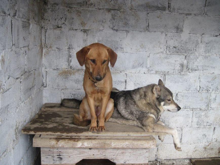 собакии 2