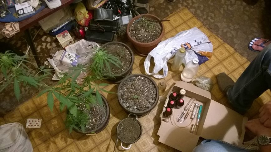 Вместо домашних растений ялтинец выращивал марихуану, фото-1