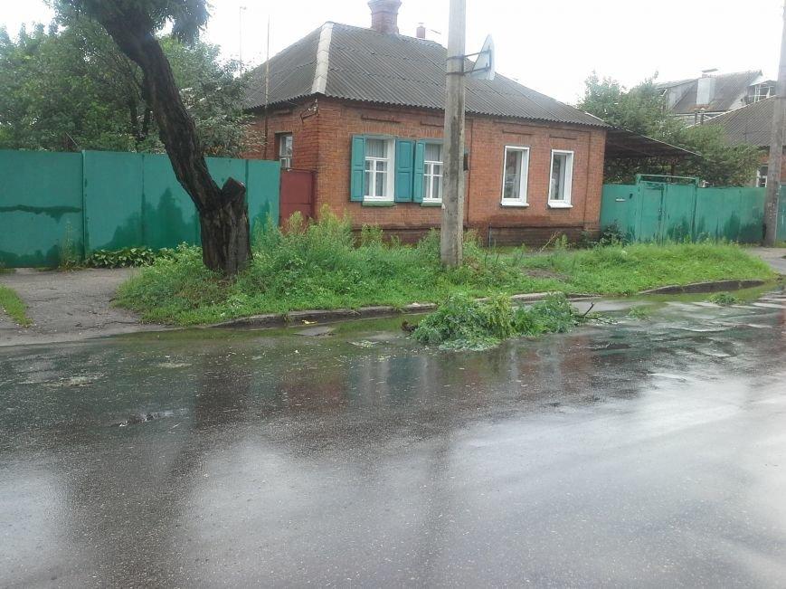 Поваленные деревья, сломанные ветки, оборванные провода: как вчера в Харькове стихия бушевала, фото-2