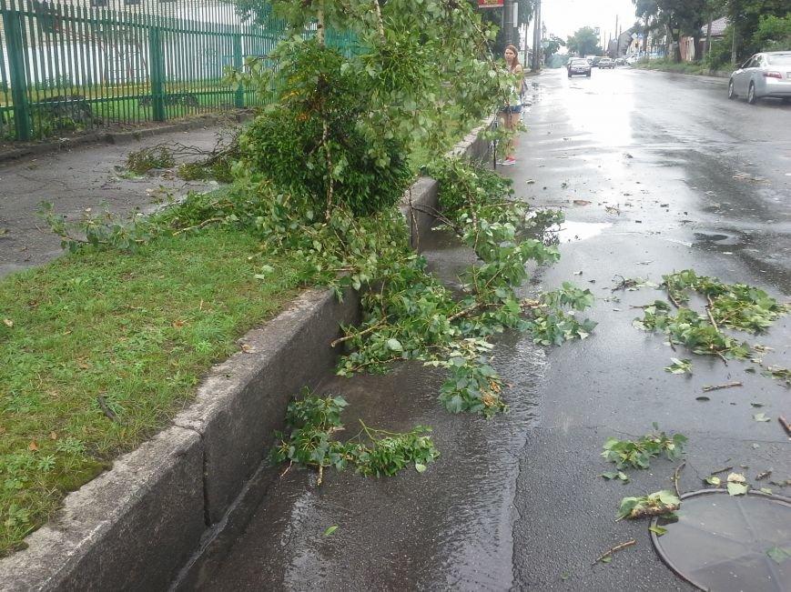Поваленные деревья, сломанные ветки, оборванные провода: как вчера в Харькове стихия бушевала, фото-4