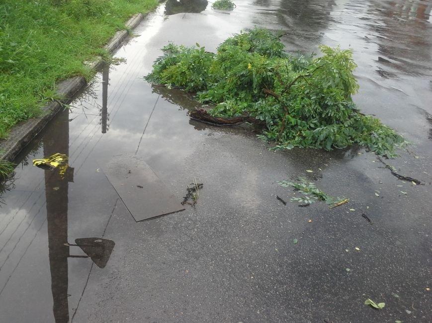 Поваленные деревья, сломанные ветки, оборванные провода: как вчера в Харькове стихия бушевала, фото-3