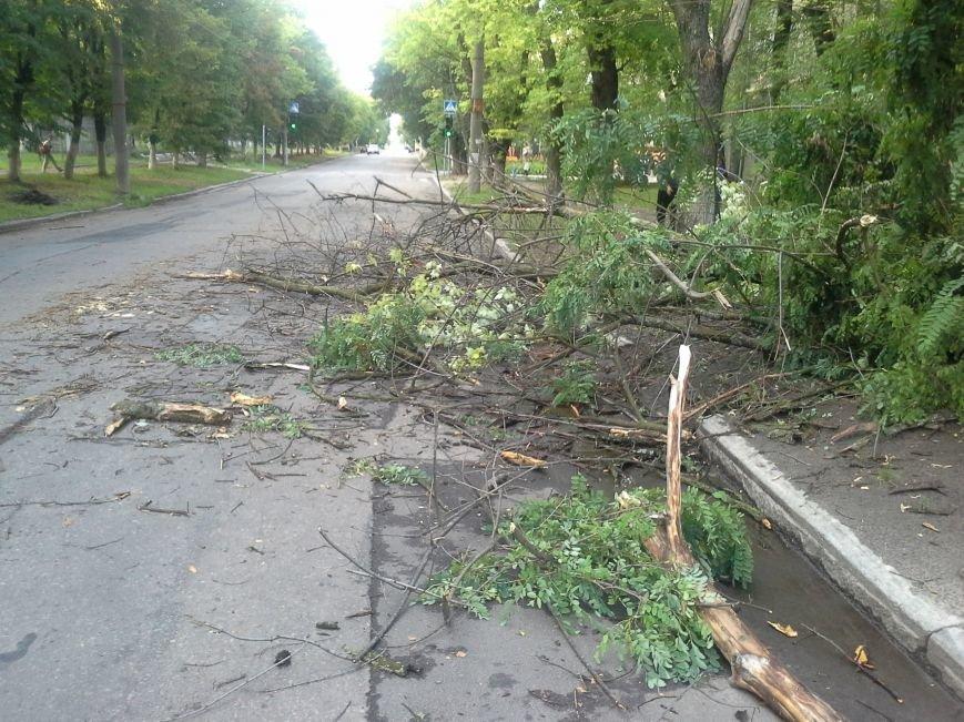 Поваленные деревья, сломанные ветки, оборванные провода: как вчера в Харькове стихия бушевала, фото-13