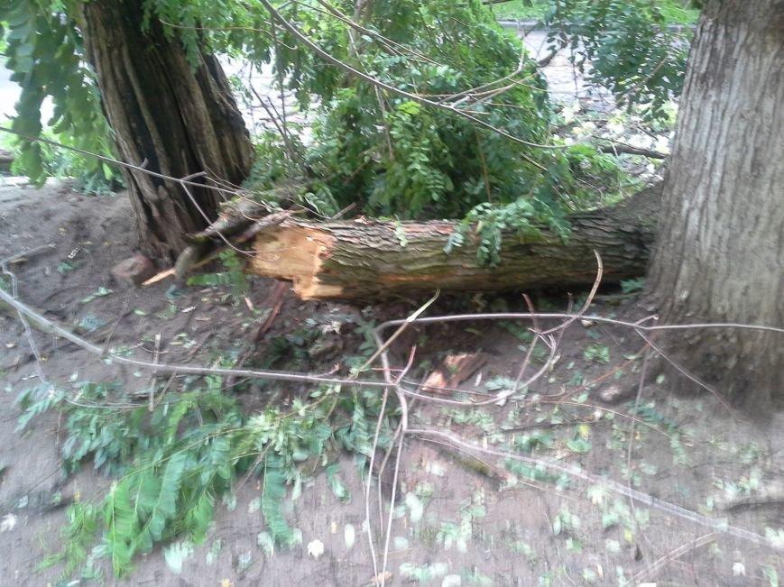 Поваленные деревья, сломанные ветки, оборванные провода: как вчера в Харькове стихия бушевала, фото-14