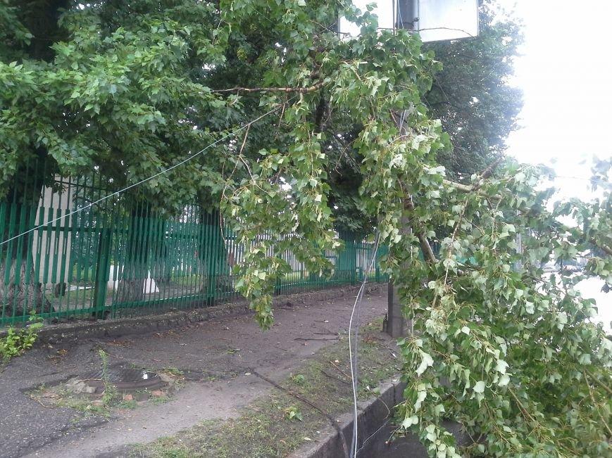 Поваленные деревья, сломанные ветки, оборванные провода: как вчера в Харькове стихия бушевала, фото-7