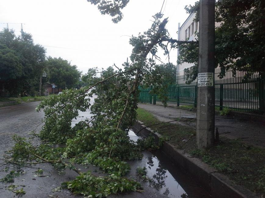 Поваленные деревья, сломанные ветки, оборванные провода: как вчера в Харькове стихия бушевала, фото-6