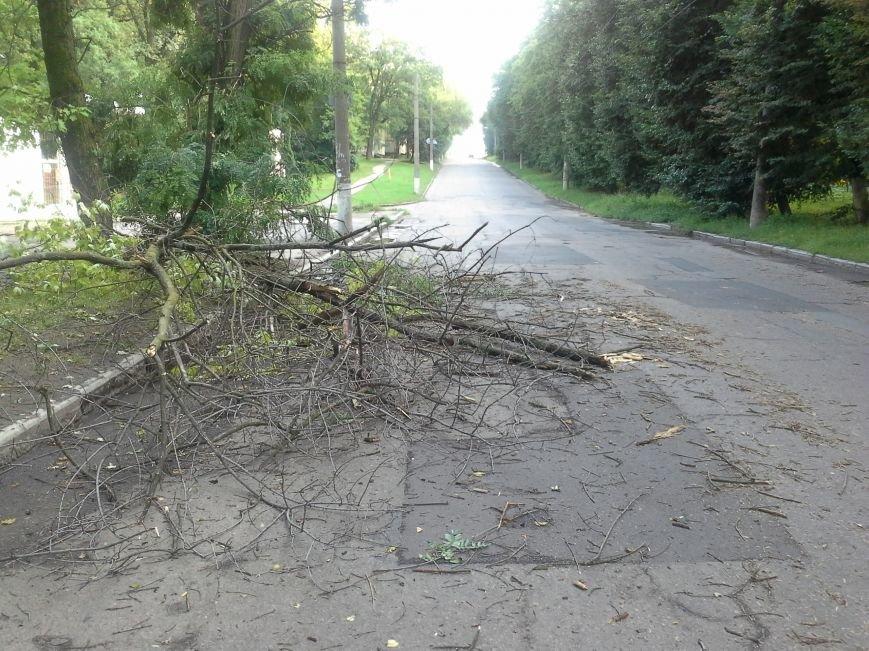 Поваленные деревья, сломанные ветки, оборванные провода: как вчера в Харькове стихия бушевала, фото-12