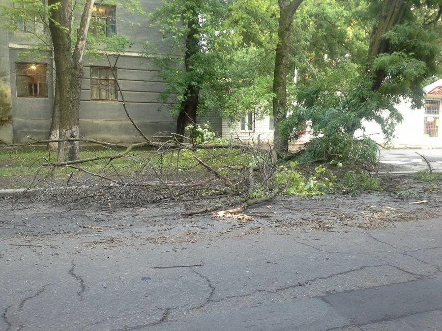 Поваленные деревья, сломанные ветки, оборванные провода: как вчера в Харькове стихия бушевала, фото-11