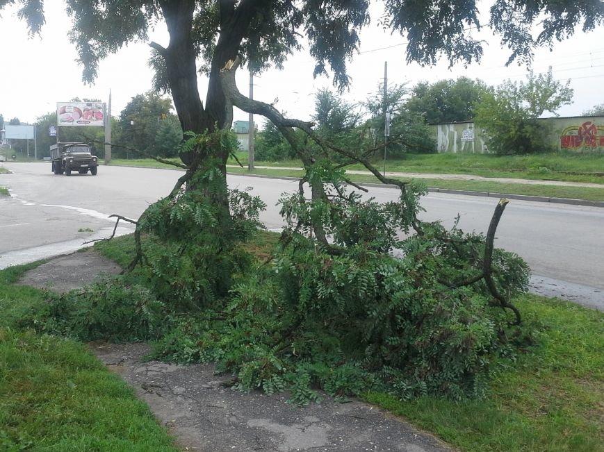 Поваленные деревья, сломанные ветки, оборванные провода: как вчера в Харькове стихия бушевала, фото-10