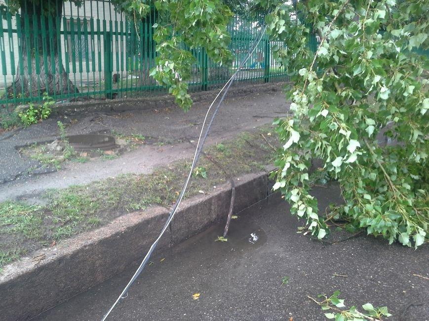 Поваленные деревья, сломанные ветки, оборванные провода: как вчера в Харькове стихия бушевала, фото-9