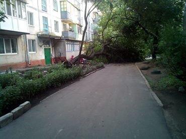 В Мариуполе дождь валил деревья, останавливал трамваи и выводил из строя подстанции (ФОТО), фото-3