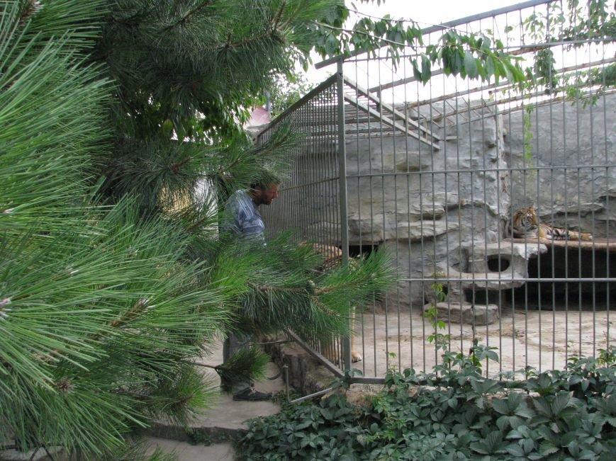 Жизнь питомцев в Васильевском зоопарке: 60 килограмм мяса в день и расширение жилплощади (ФОТОРЕПОРТАЖ), фото-7