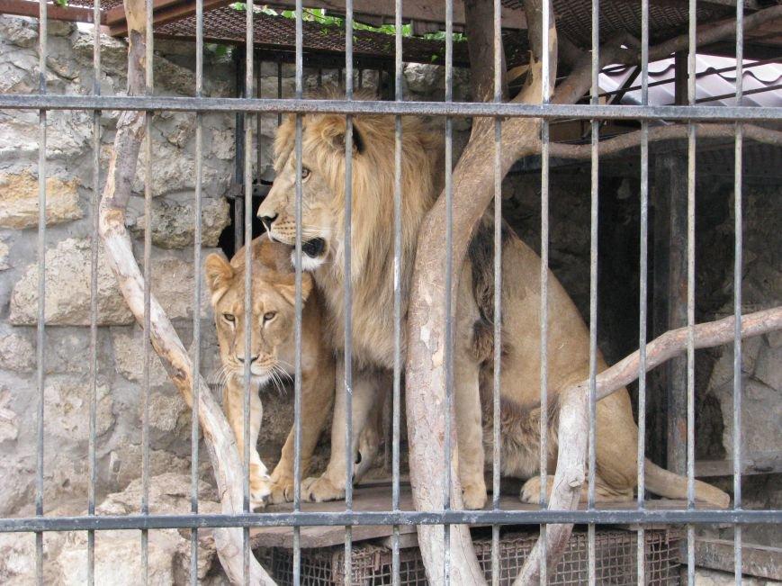 Жизнь питомцев в Васильевском зоопарке: 60 килограмм мяса в день и расширение жилплощади (ФОТОРЕПОРТАЖ), фото-6
