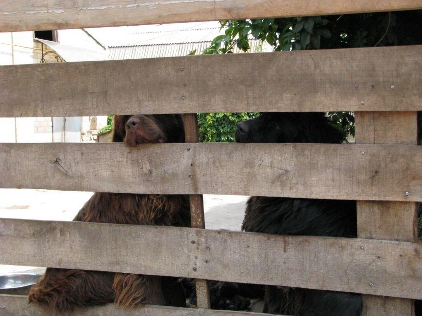 Жизнь питомцев в Васильевском зоопарке: 60 килограмм мяса в день и расширение жилплощади (ФОТОРЕПОРТАЖ), фото-14