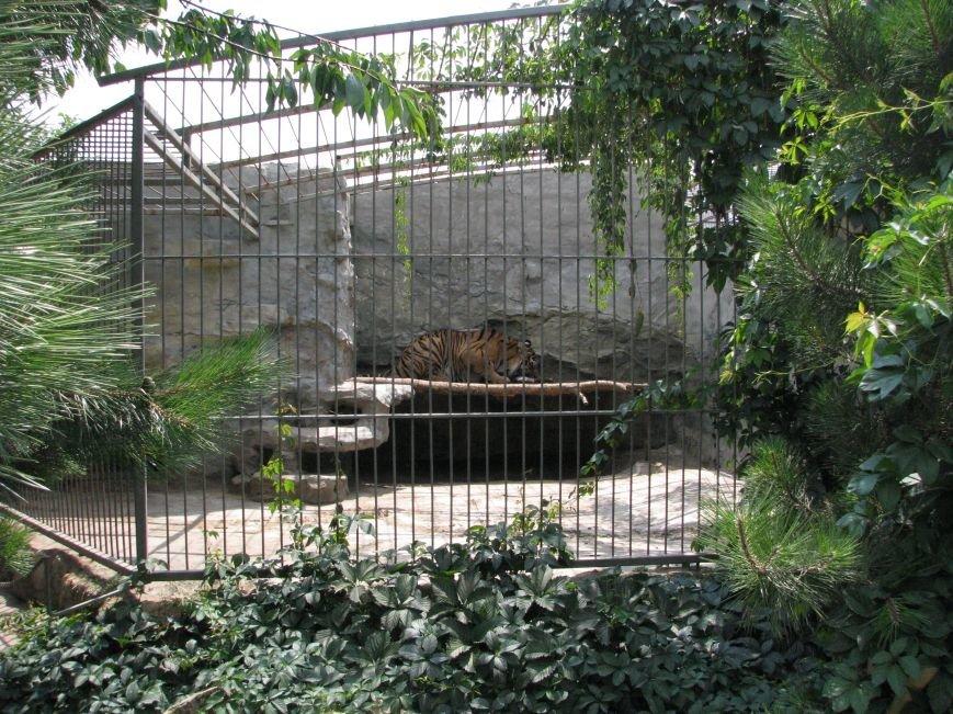 Жизнь питомцев в Васильевском зоопарке: 60 килограмм мяса в день и расширение жилплощади (ФОТОРЕПОРТАЖ), фото-18