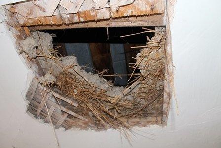 Рівненські позашкільні заклади потребують негайного капітального ремонту (Фото), фото-6