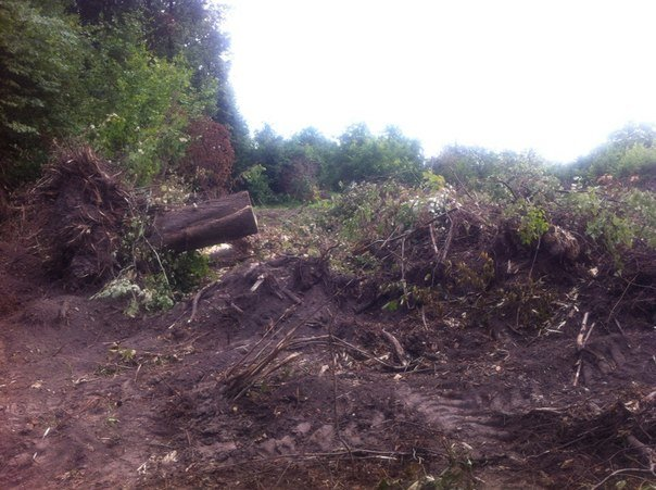 В Липниках вирубують ліс (фоторепортаж), фото-3
