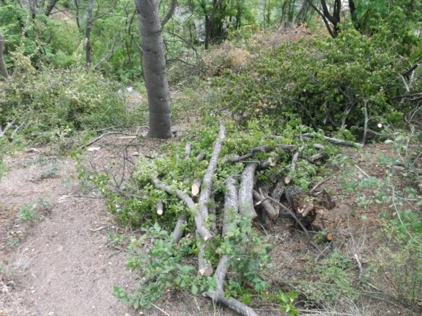 8 свежие дрова