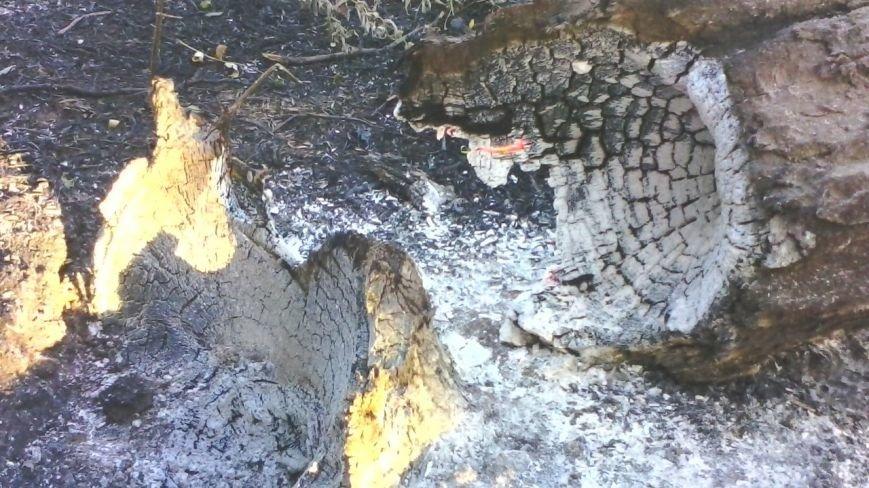 Под Мариуполем горела заповедная территория (ФОТО), фото-4