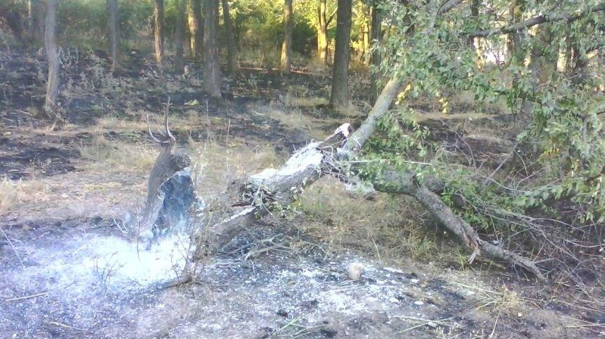 Под Мариуполем горела заповедная территория (ФОТО), фото-3