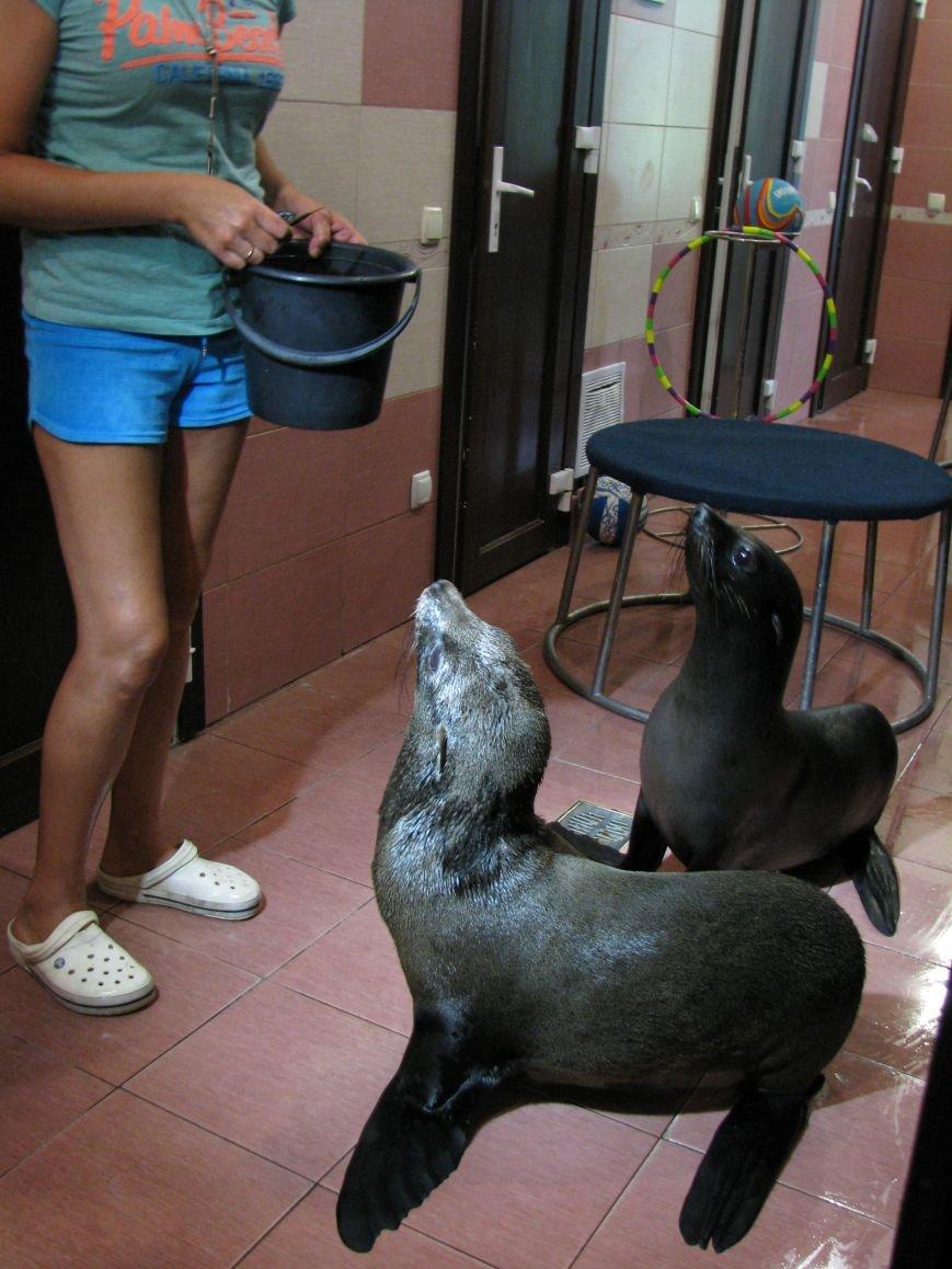 Дельфины и морские котики из Донецка переехали в Харьков, фото-2