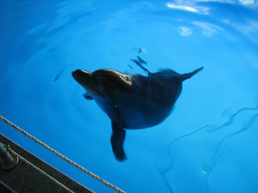 Дельфины и морские котики из Донецка переехали в Харьков, фото-3