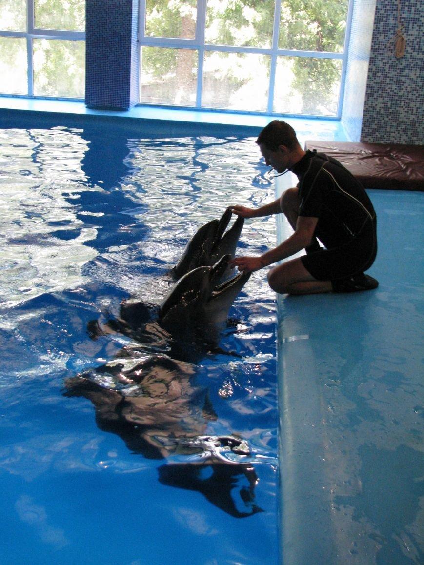 Дельфины и морские котики из Донецка переехали в Харьков, фото-1