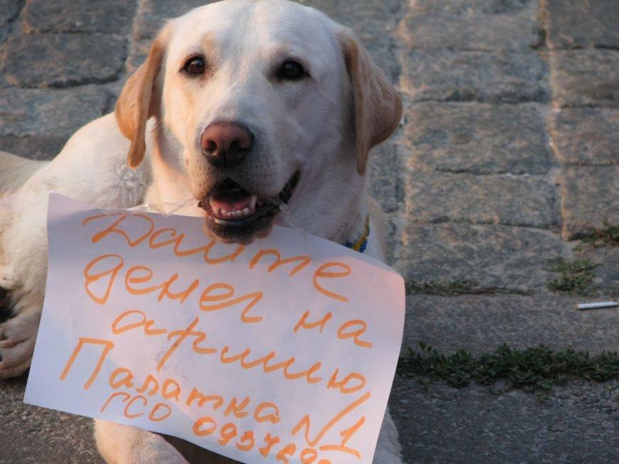 В Харькове прошел объединенный митинг за Украину и небольшое собрание проросийских активистов, фото-5