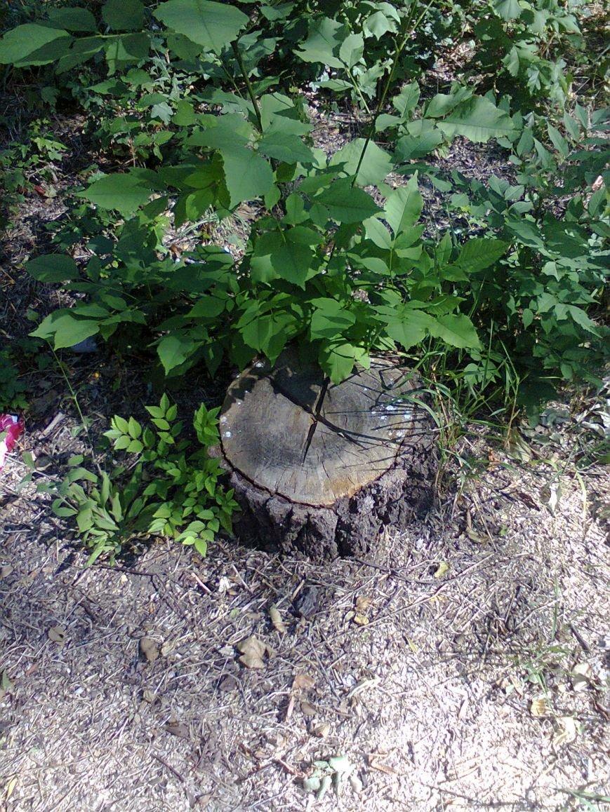 В парке ДК Строитель вырубили 167 деревьев (ФОТО), фото-5