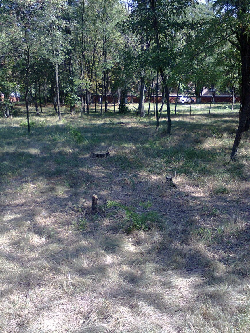 В парке ДК Строитель вырубили 167 деревьев (ФОТО), фото-6