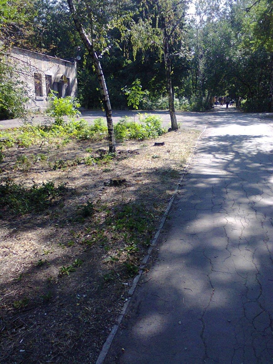 В парке ДК Строитель вырубили 167 деревьев (ФОТО), фото-1