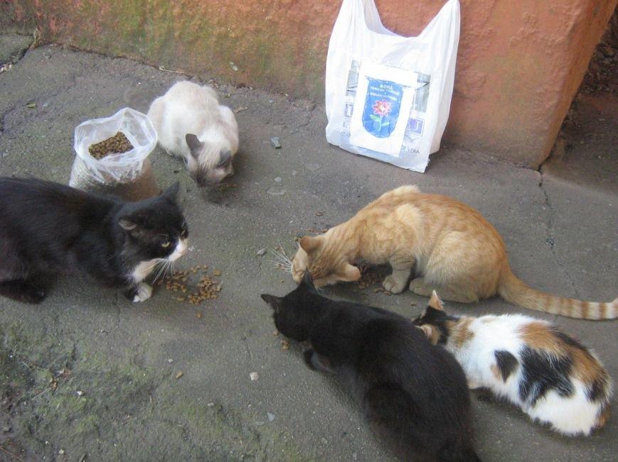 Мариупольцы накормили бездомных собак и кошек в Краматорске (ФОТО), фото-4